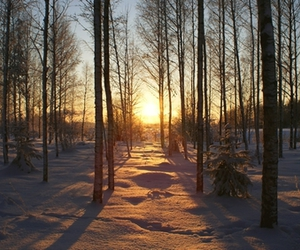 forrest, photography, and sundown image