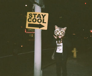 cat, cool, and stay cool image