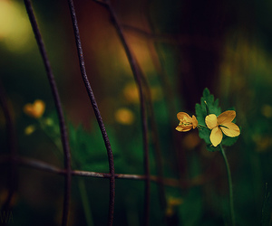 fence, weed, and yellow image