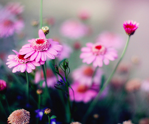 bokeh, floral, and flowers image