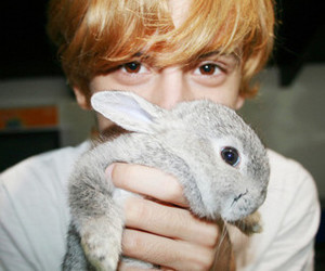 boy, cute, and bunny image