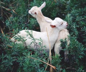 lamb, animal, and nature image