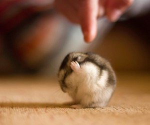 fluffy, little, and cute image