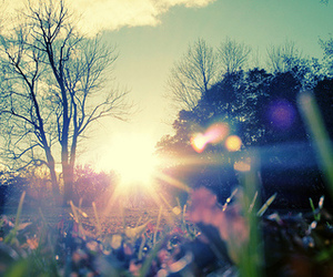 nature, sun, and photography image