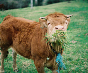 cow, nature, and animal image