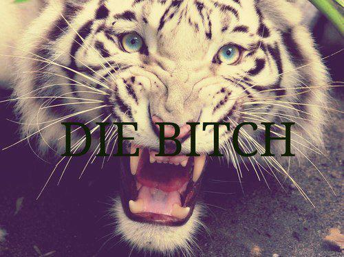bitch, die, and tiger image
