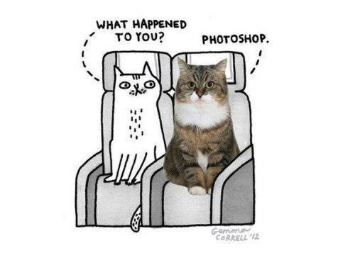 cat, photoshop, and funny image
