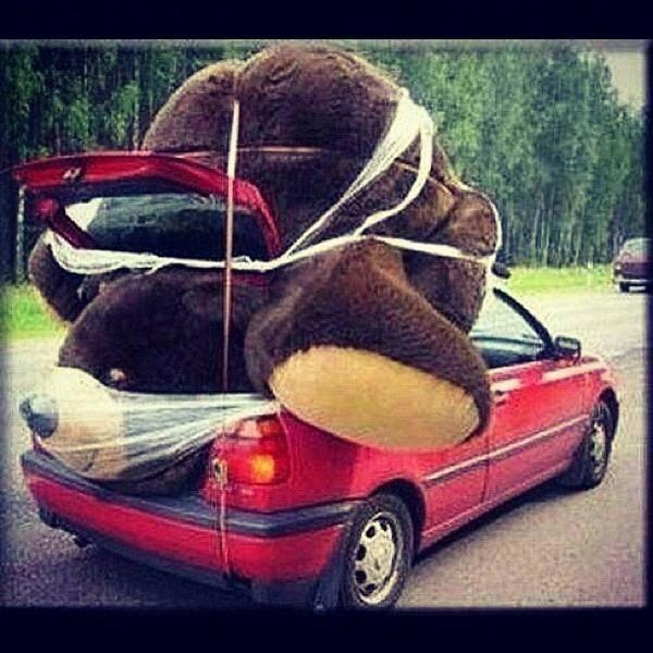 bear, love, and car image
