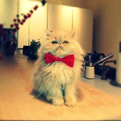 cat, cute, and yoda image