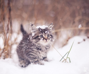 animals, cat, and lovely image