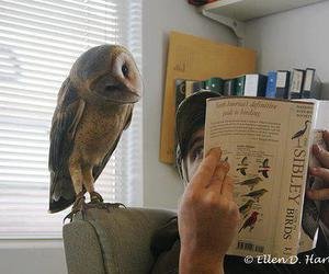 owl, funny, and book image