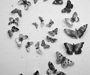 butterflies and spiral image