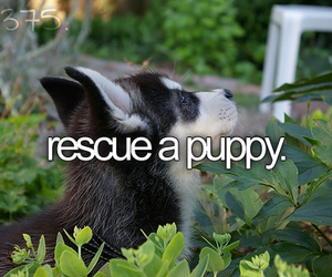 puppy, before i die, and bucket list image