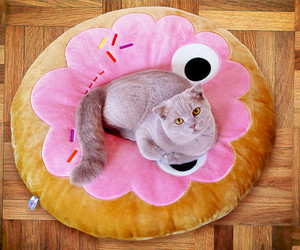 cat, cute, and donut image