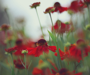 5d, nature, and flowers image
