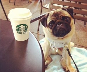 dog, starbucks, and cute image