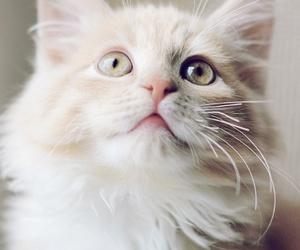 animal, kitten, and nice image