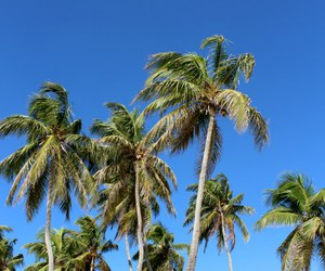 blue, blue sky, and Carribean image