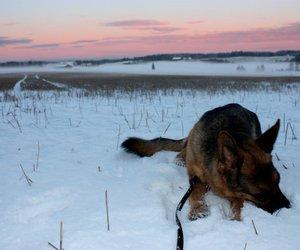 dog, german shepherd, and winter image