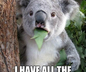 Koala, funny, and bear image