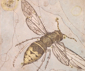 bee, insect, and obsolete image
