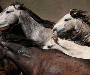 horses and mustangs image