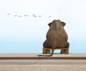 elephant, bird, and animal image