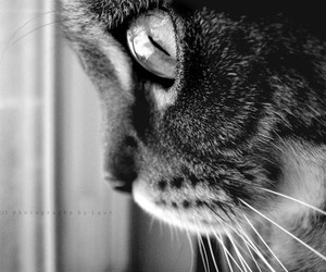 black, cat, and white image