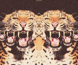 tiger, animal, and leopard image