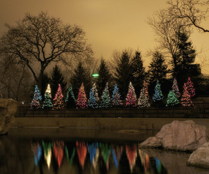 christmas, nature, and lights image
