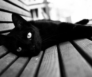 beautiful, black and white, and black image
