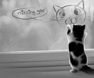 cat, black and white, and missing you image