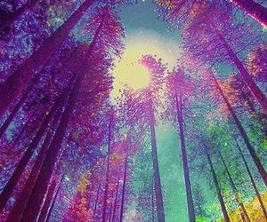 forest, tree, and colors image