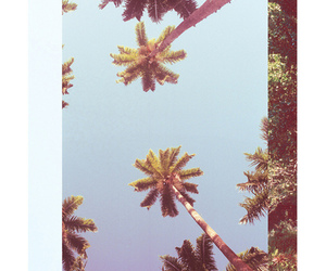 palm trees, palms, and photography image