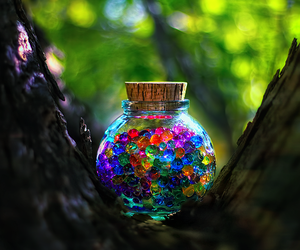 colors, tree, and photography image