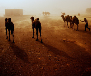 africa, camels, and photography image