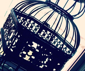 365, bird, and cage image
