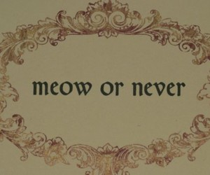 meow, cat, and never image