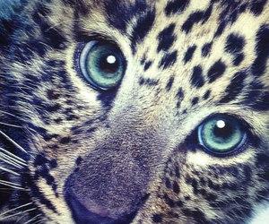 cute, animal, and eyes image