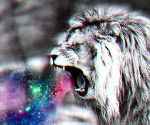 lion, animal, and galaxy image