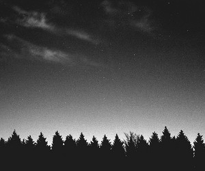 night, sky, and tree image