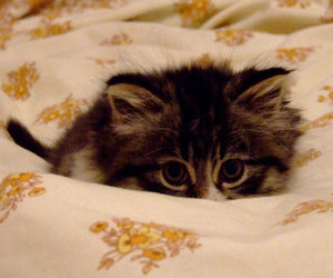 adorable, baby animals, and furry image