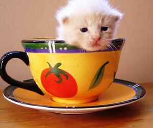 baby, cat, and cup image