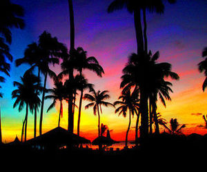 colourful, palmtrees, and sunset image