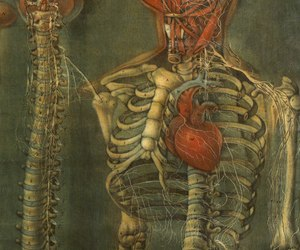 anatomic, art, and beauty image