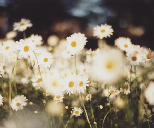 flower, simple, and cute image
