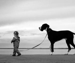 dog, black and white, and baby image