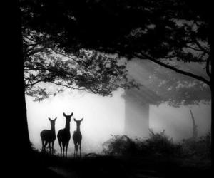 forest, animal, and deer image