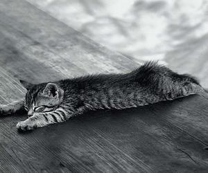 adorable, b&w, and black and white image
