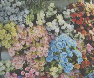 flowers, colorful, and roses image
